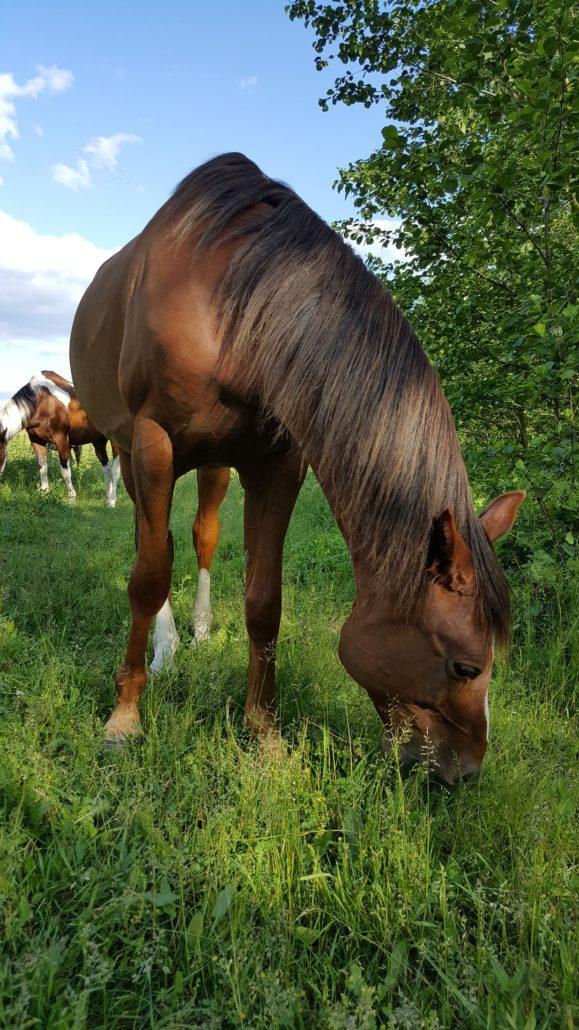 Paardenweide bemesten