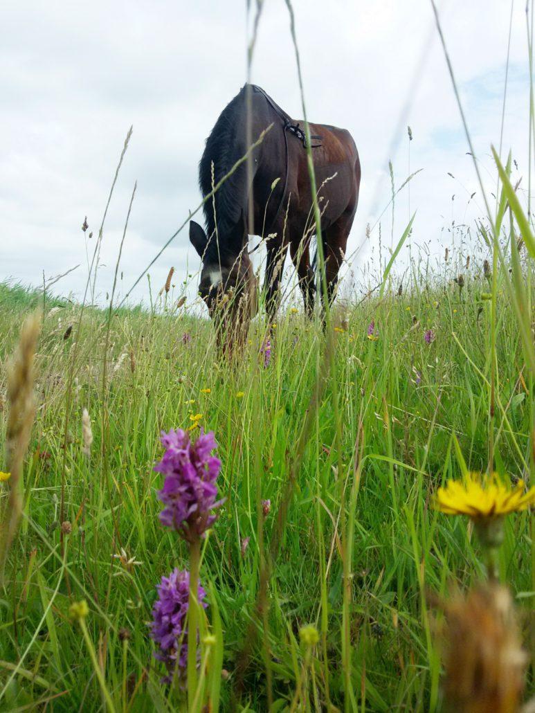 De paardenweide met bloemen
