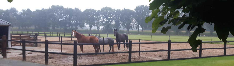 Paardengrasland