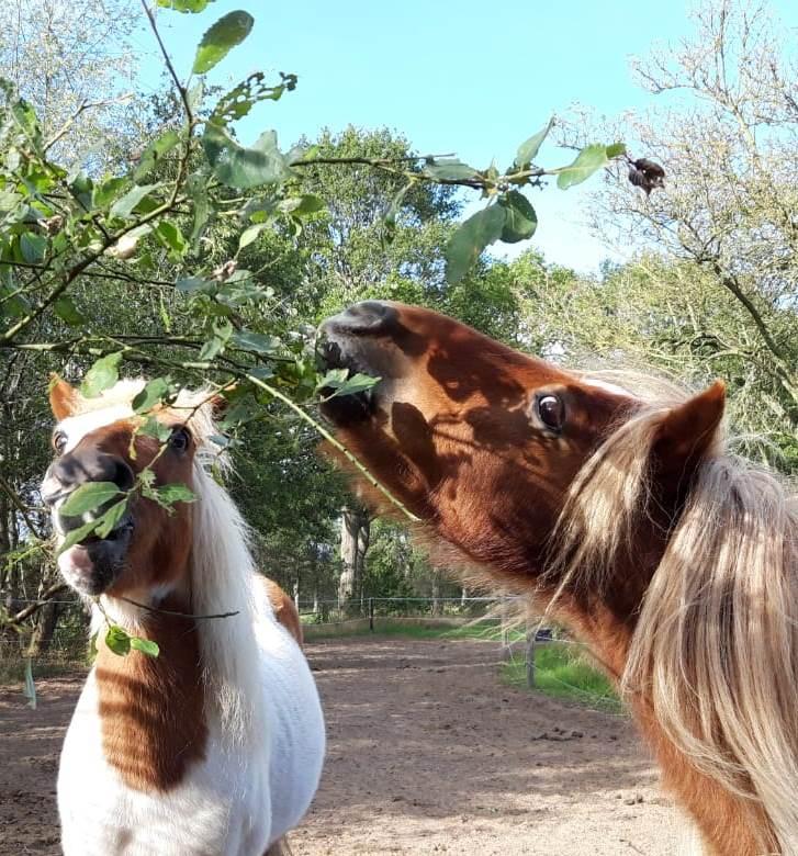 Eetbare planten voor paarden